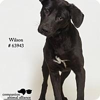Adopt A Pet :: Wilson - Baton Rouge, LA