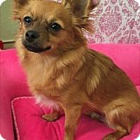 Adopt A Pet :: Emmie - Las Vegas, NV