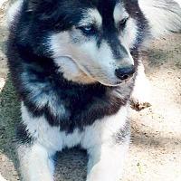 Adopt A Pet :: Malik - Memphis, TN