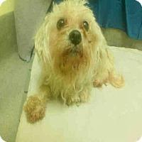 Adopt A Pet :: *LILO - Upper Marlboro, MD