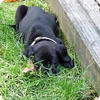 Adopt A Pet :: James - Barnegat, NJ