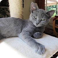 Adopt A Pet :: Anastasia - Orange, CA