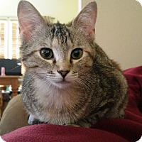 Adopt A Pet :: Cupid  (To Be Adopted with Ceasar) - Amelia, OH