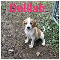 Adopt A Pet :: Delilah - fort wayne, IN