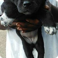 Adopt A Pet :: Bambi (has been adopted) - Trenton, NJ