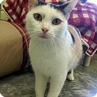 Adopt A Pet :: Shasta - Shinnston, WV