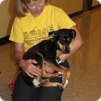 Adopt A Pet :: Vivian - Staunton, VA