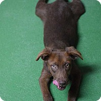 Adopt A Pet :: Charlie - Manhattan, NY