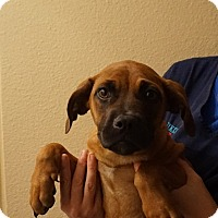 Adopt A Pet :: Emma - Oviedo, FL