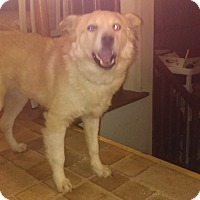 Adopt A Pet :: Cutie Patutie - Hainesville, IL