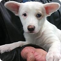 Adopt A Pet :: Marilee - Phoenix, AZ