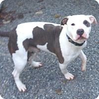 Adopt A Pet :: Ghost (courtesy post) - Woodbridge, CT