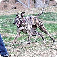 Adopt A Pet :: Puzzler - Santa Rosa, CA