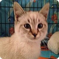 Adopt A Pet :: Latte Coffee - East Hanover, NJ