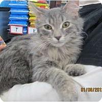 Adopt A Pet :: Gretel - Sterling Hgts, MI