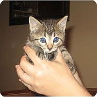 Adopt A Pet :: WE HAVE KITTENS!! - Warminster, PA