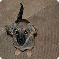 Adopt A Pet :: TYLER - Torrance, CA