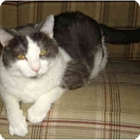 Adopt A Pet :: Mimi - Greenville, SC
