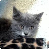 Adopt A Pet :: Astros - Davis, CA