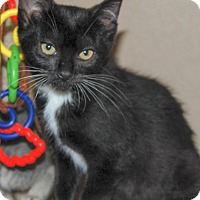 Adopt A Pet :: Olivia - The Colony, TX