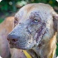 Adopt A Pet :: Phoenix 653 - Naples, FL