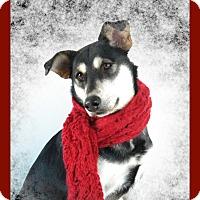Adopt A Pet :: Myla - Monteregie, QC