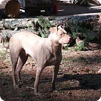 Adopt A Pet :: Buddy - McKenna, WA