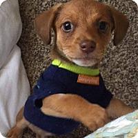 Adopt A Pet :: Otis - Humble, TX