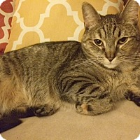 Adopt A Pet :: Katniss - Rochester, NY