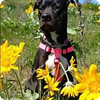 Adopt A Pet :: Leelo *in Foster* - Vernon, BC