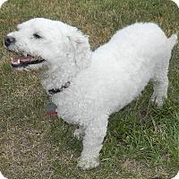Adopt A Pet :: Kaylee - Umatilla, FL
