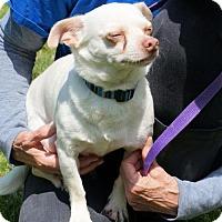 Adopt A Pet :: 1605-1516 Chico - Virginia Beach, VA