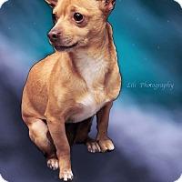 Adopt A Pet :: Poncho - Warner Robins, GA