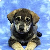Adopt A Pet :: FARREL - Westminster, CO