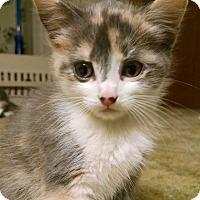 Adopt A Pet :: Maggie - Garden City, MI