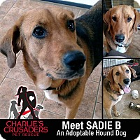 Adopt A Pet :: Sadie B - Spring City, PA