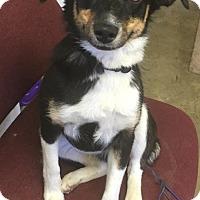 Adopt A Pet :: MOLLIE - Cadiz, OH