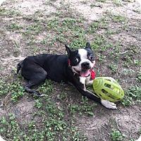 Adopt A Pet :: Markie - Van Vleck, TX