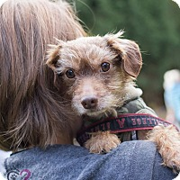 Adopt A Pet :: Vinny 2 - Grand Rapids, MI