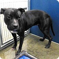 Adopt A Pet :: Sweet Pea - Henderson, NC