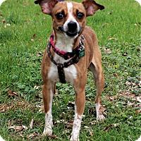 Adopt A Pet :: Evey - Lisbon, IA