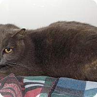 Adopt A Pet :: Billie Holiday - Orleans, VT