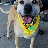 Adopt A Pet :: J. Brady - Nashville, TN