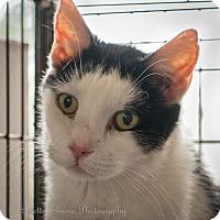 Adopt A Pet :: Q - Daleville, AL