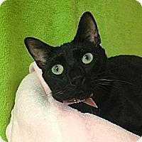 Adopt A Pet :: Jasmine (aka