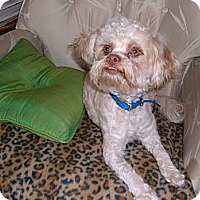 Adopt A Pet :: Petey - Culver City, CA