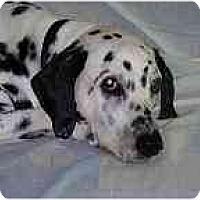 Adopt A Pet :: Snoopy - Milwaukee, WI