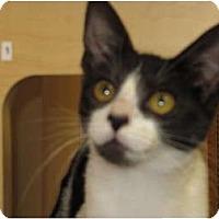 Adopt A Pet :: Whimsy - Modesto, CA
