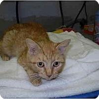 Adopt A Pet :: Maizy - San Ramon, CA