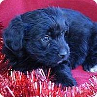 Adopt A Pet :: JEFFREY - Torrance, CA